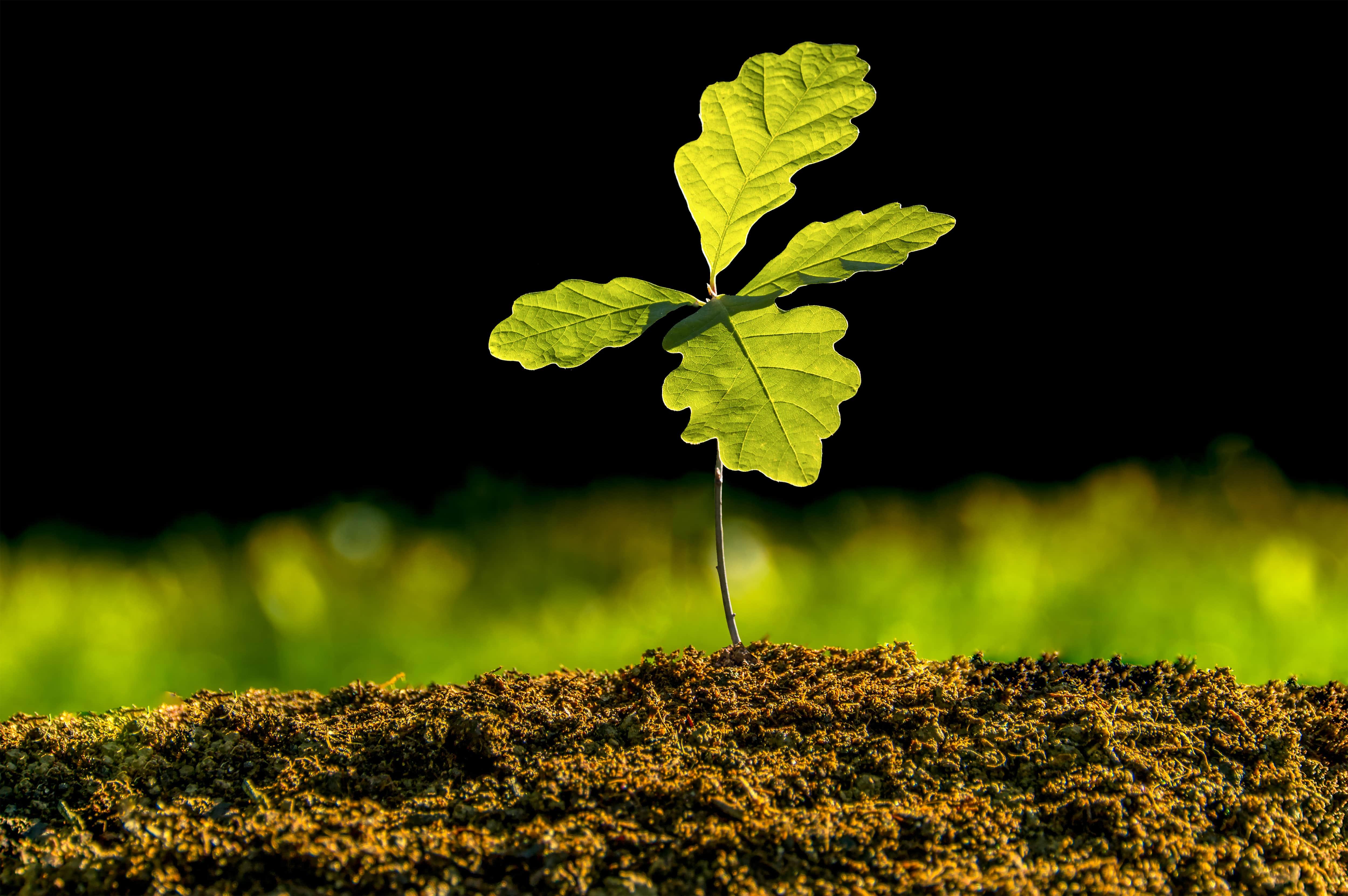 Creative and Fun Ways to Celebrate Earth Day